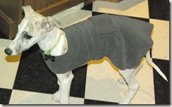 whippet coat