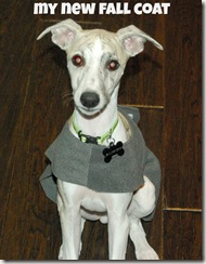 whippet fleece coat