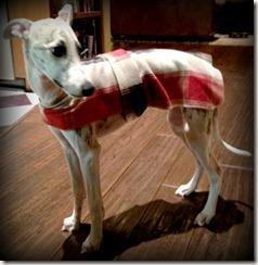 finished dog coat